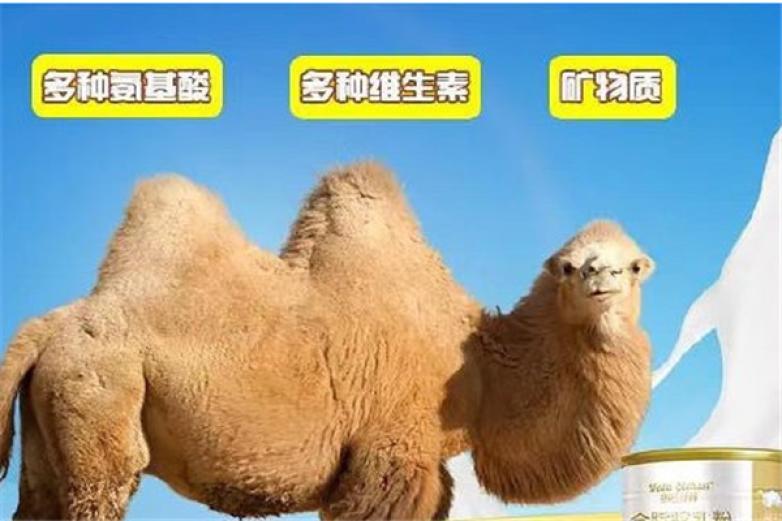 莱咔美骆驼奶加盟